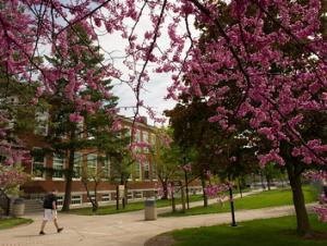 Campus buildings framed by springtime blooms